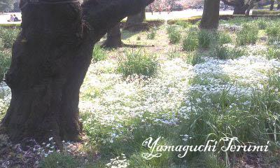 20120418_4花