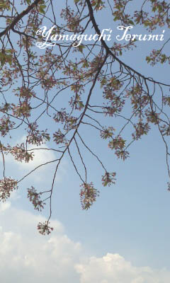 20120418_3桜