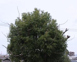 tree 20111102
