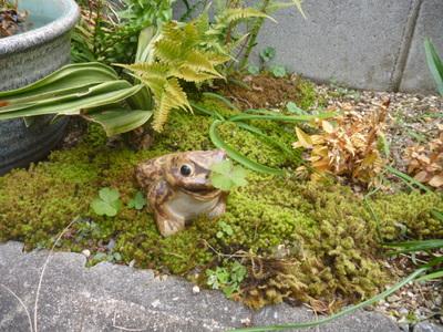 ハッピー蛙 1