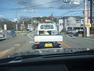 トラックのわんちゃん