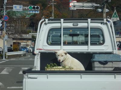 トラックのわんちゃん2