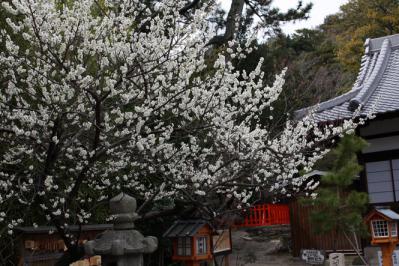玉津島神社と梅の花