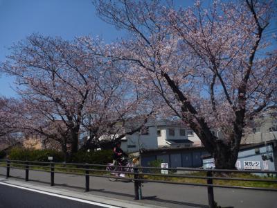 和歌山の春の景色3