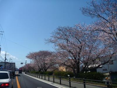 和歌山の春の景色4