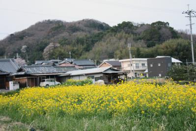 菜の花と里山