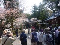 伊太祁曾神社と桜と皆様