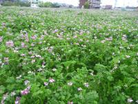 紀ノ川沿いの町の風景