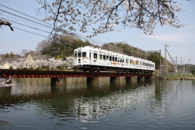 大池遊園 桜とたま電車