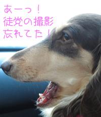 nico_ss.jpg