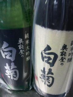 白菊 (1)