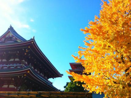 寺と空と銀杏