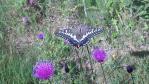 2011_0816_093234-DVC00385.jpg