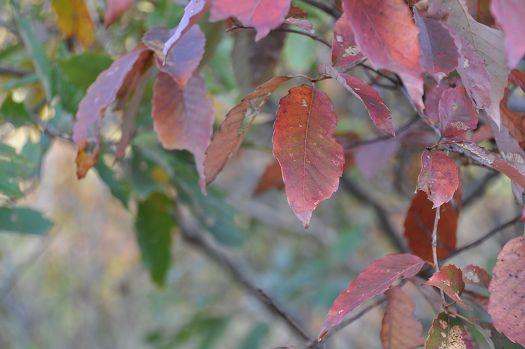 2012-11-20-1456(028)0003.jpg