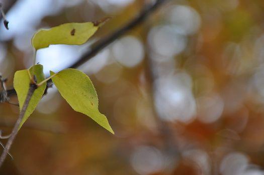 2012-11-20-1501(037)0004.jpg