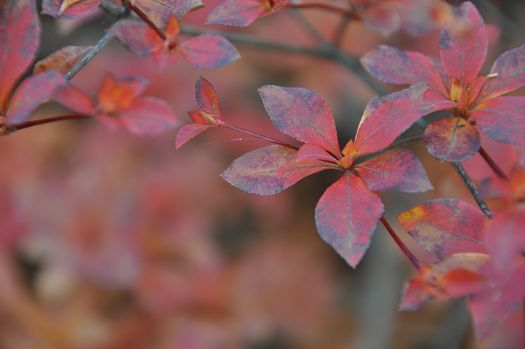 2012-11-20-1509(059)0008.jpg