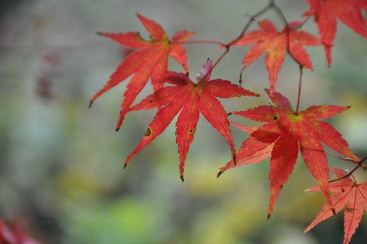 2012-11-20-1533(083)0010.jpg