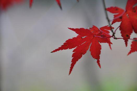 2012-11-20-1539(094)0012.jpg