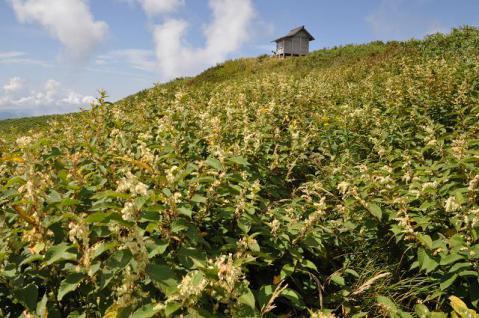 20120907 nougouhakusan037