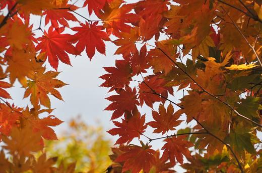 20121013 oogasayama 011