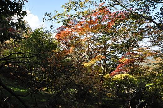 20121021 kamigabora 022