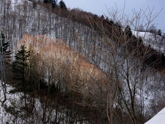 20121216 terashiyama 002