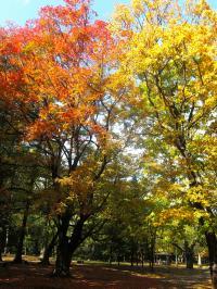 秋の講演1