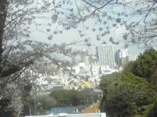 120406山手の桜2