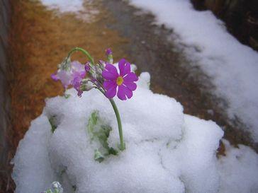 snow 20140208_05s