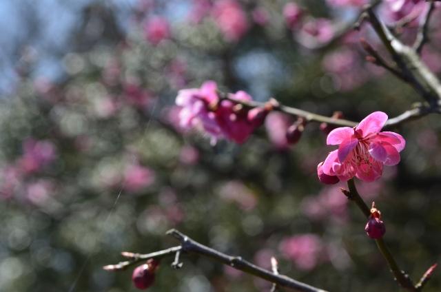 2012.03.29豪農の館内山邸 (47) (640x424)