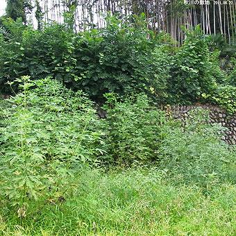 ジャングル0281