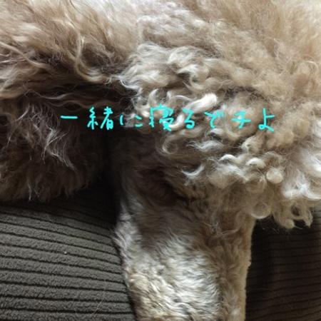 fc2blog_20141202231820370.jpg