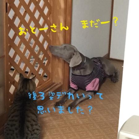 fc2blog_20141203214339c61.jpg
