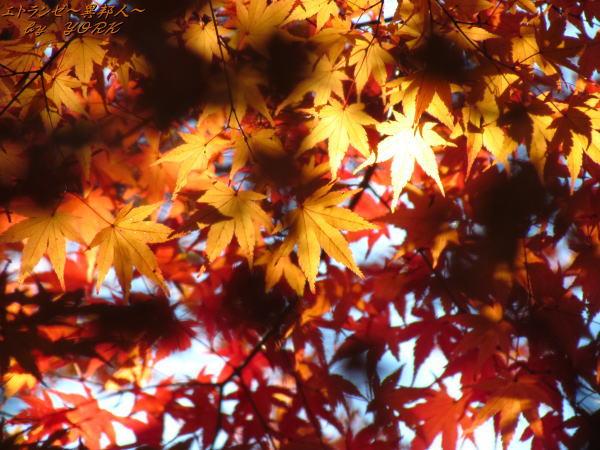 0773紅葉色づく131123