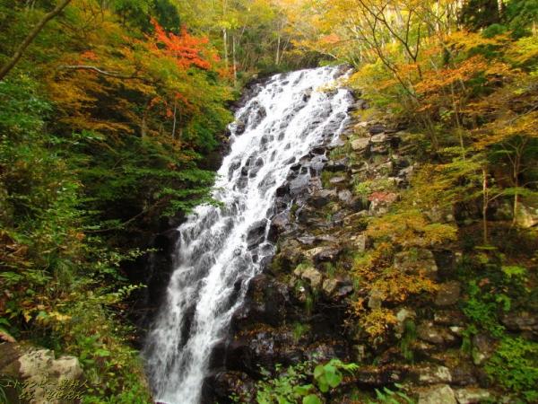 5442秋の布滝141026