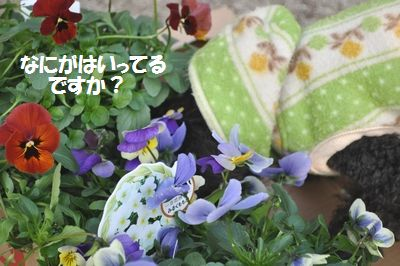 DSC_0121_20111230155527.jpg