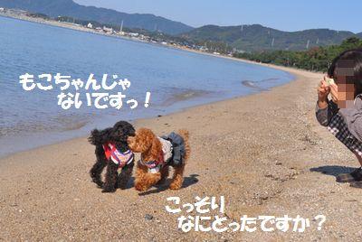 DSC_0175_20111127132527.jpg
