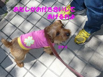 2012_0407_112357-P1050890a.jpg