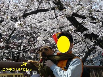 2012_0407_113609-P1050894a.jpg