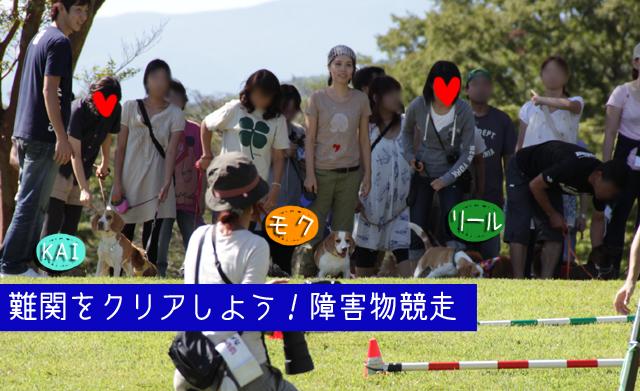 0923レモンビーグル モク 箱根3