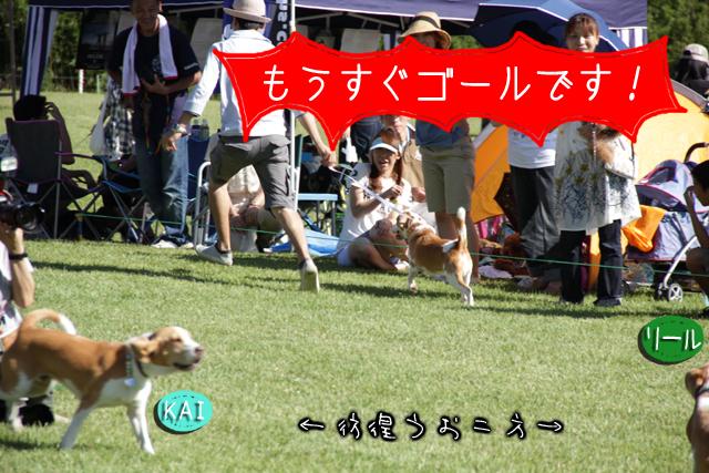 0923レモンビーグル モク 箱根11