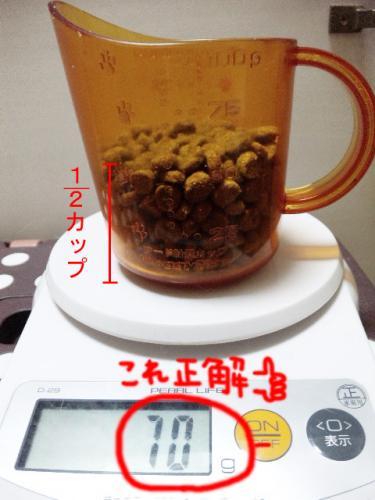 1003レモンビーグル モク2