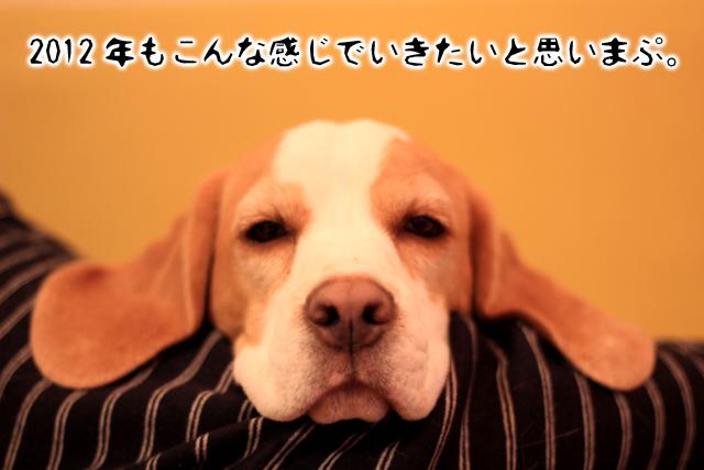 20120106オレ様はレモンビーグル