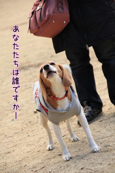 20120112オレ様はレモンビーグル2