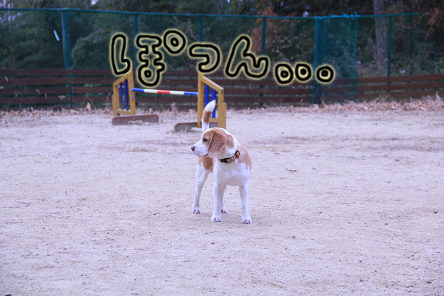 20120112オレ様はレモンビーグル4