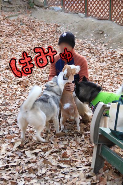 20120113オレ様はレモンビーグル6