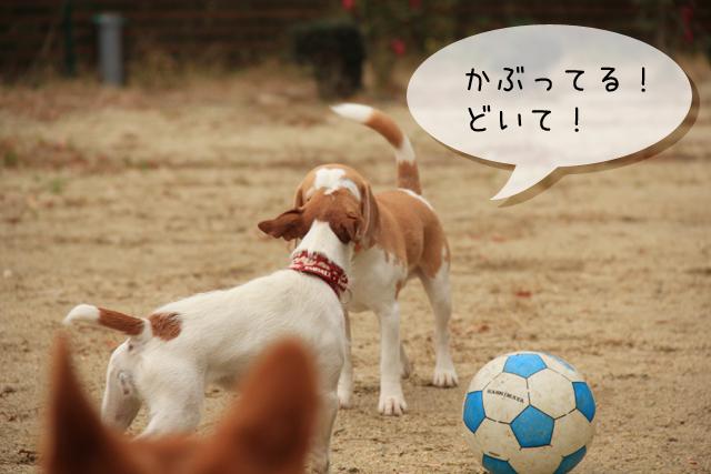 20120127オレ様はレモンビーグル2