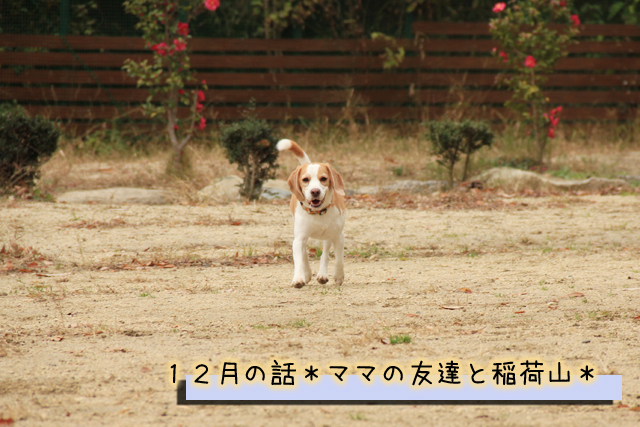 20120127オレ様はレモンビーグル1