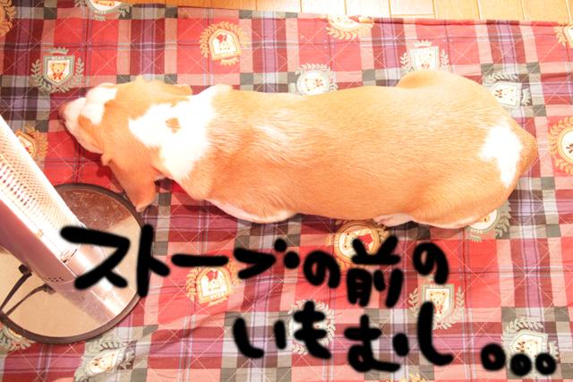 20120130オレ様はレモンビーグル2