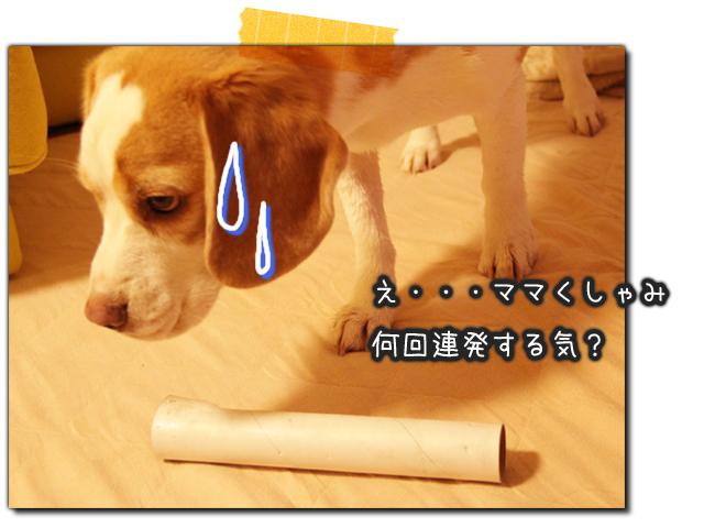 0216レモンビーグルMOKU